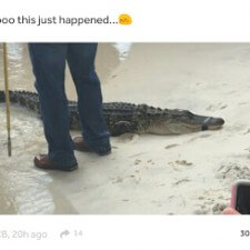 Experiential marketing: Secret photo post from Panama City Beach of an alligator on the sand