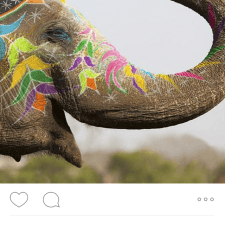 Peer to peer marketing: Painted elephant image for STA Travel India adventure from a college brand ambassador
